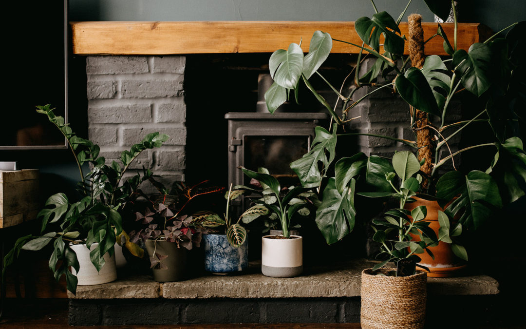 5 Tips for Better Indoor Air Quality